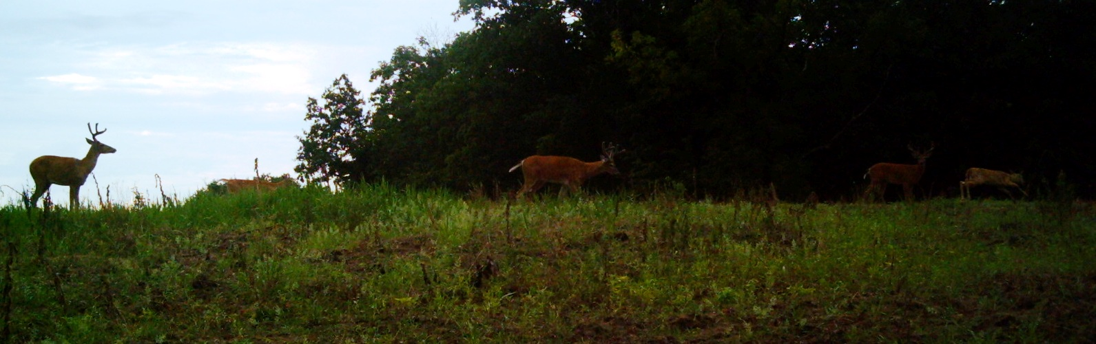 track the 2013 whitetail rut deer hunting whitetail deer get live